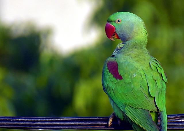 Ako naučiť papagája rozprávať